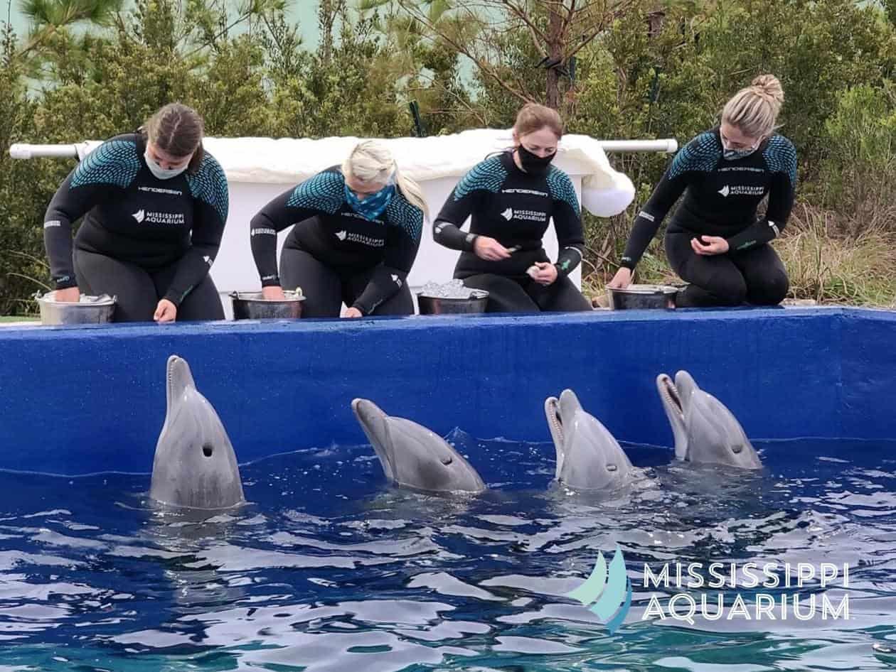 MS Aquarium new to the gulf coast